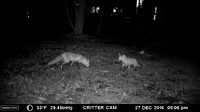 Critter Cam & Prints